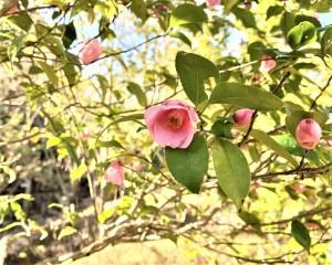 roseflora_1024