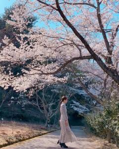 【さくら賞】06-01_桜と女性(見本園)