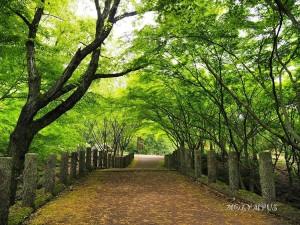 【フレッシュグリーン賞】18-01_やまぼうし橋